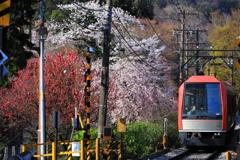 春の箱根 II
