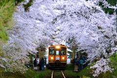 津鉄の春 2019 III