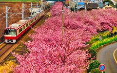 お花見列車 Luminar編集版