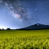 菜の花銀河