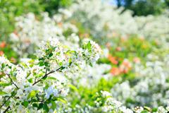 グダリ沼の春 I