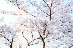 春の箱根 VI