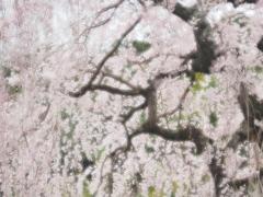 春のささやき