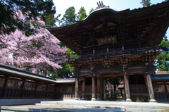 報恩寺の桜