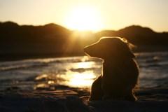 愛犬、「あんきも」☆