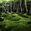 Fragrance of green