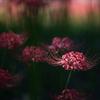 """Colors of autumn """"Crimson"""" vol.1"""