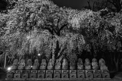 花見仏2016
