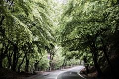 雨の林道を走る