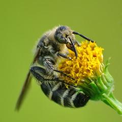 黄色いお花とハッチ