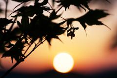 夕陽のブーメラン