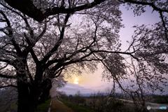 染まらない空・桜