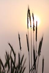 優しい夕日