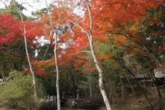 水俣 住吉神社の紅葉