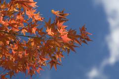 空高き、秋