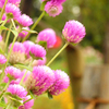 flower_010