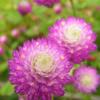 flower_009