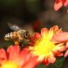 花粉まみれ♪