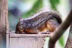 こうしてお昼寝できるの幸せ~平和だよね!