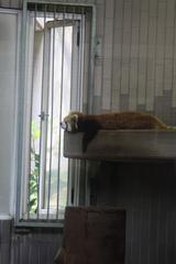 暑い~窓から涼しい風が・・・来ない(泣)!