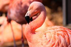 Elegant flamingo.