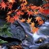 小川+紅葉