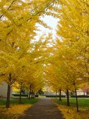 キャンパスの彩り (2008)