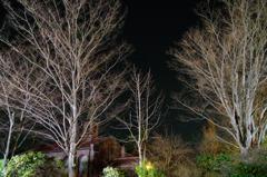 夜の碌山美術館