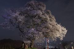 名も無き一本桜