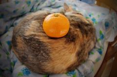 Osonyae Cat