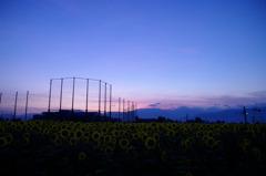 陽を待つ群衆