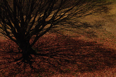寄って大樹の影?