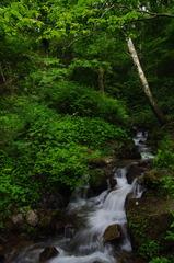 深緑の渓流