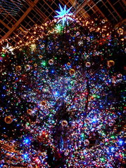 満天のクリスマスツリー