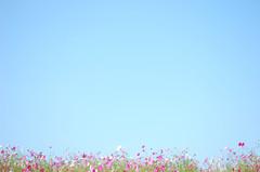 控え目な花たち