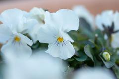 明るく花、花、花・・・