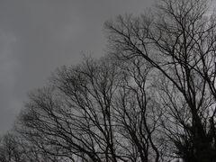 木枯らし・・・