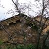 古い土蔵と桜