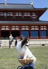 奈良の休日