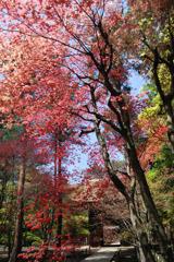 初夏の紅葉 #4