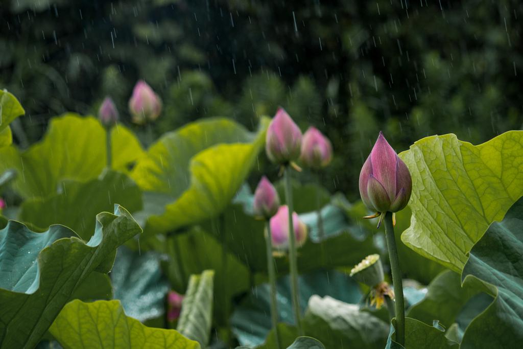 a rainy day 2