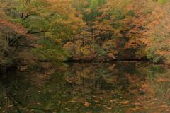 秋の森の中で鏡面に映る竹絵