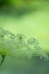 夏 湿生花園