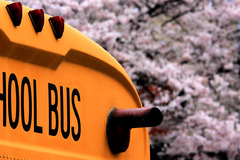 SCHOOL BUS & CHERRY BLOSSAM