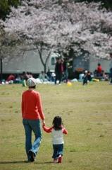 桜を見に行こう。