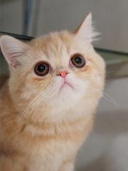 ボスネコと同じ猫