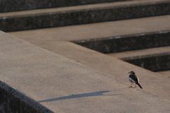 鳥と朝焼け
