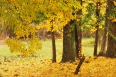 去り行く秋