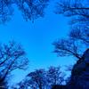 曽爾屏風岩の桜 #1