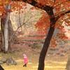 autumn fairyland